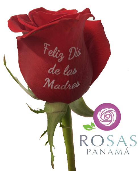 Calendario Rosa Png.Calendario 2019 Panama